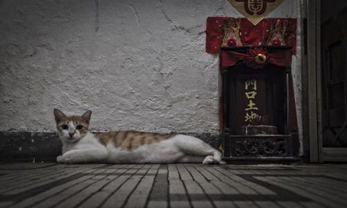 Zdjecie HONG KONG / - / Mowloon / Chongking Mansion