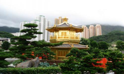 Zdjecie HONG KONG / Hong Kong / Hong Kong / Oaza ciszy i sp