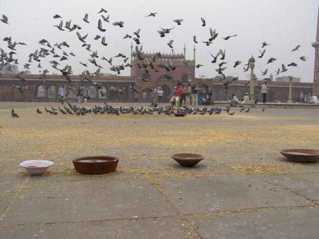 Zdjęcia: Indie, INDIE