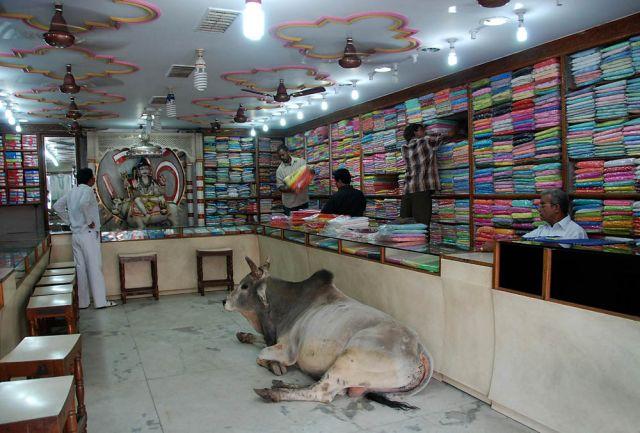 Zdjęcia: Waranasi, Uttar Pradesh, Co może święta krowa, INDIE