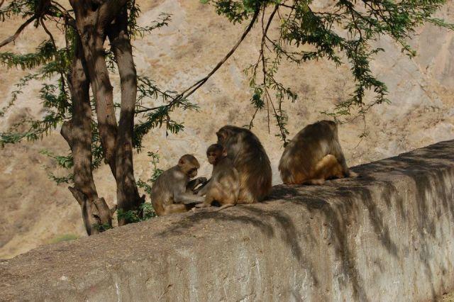 Zdjęcia: Jaipur, Radżastan, W drodze do Świątyni Małp, INDIE