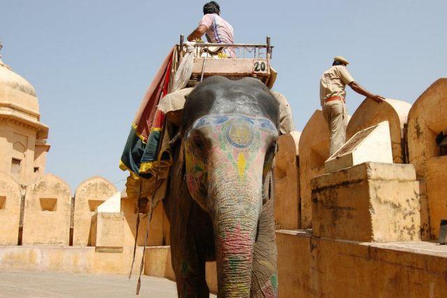 Zdjęcia: Jaipur, Radżastan, Przejażdżka na słoniu w Forcie Amber, INDIE