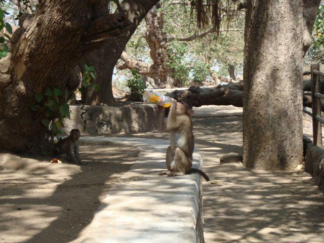 Zdjęcia: Wyspa Elefanta, Mumbai, A pic sie chce..., INDIE