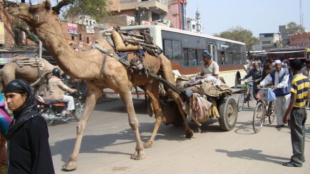 Zdjęcia: Jaipur, Rajasthan, No to wio..., INDIE