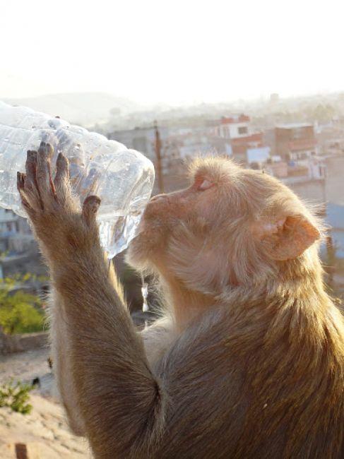 Zdjęcia: Jaipur, reklama wody mineralnej, INDIE
