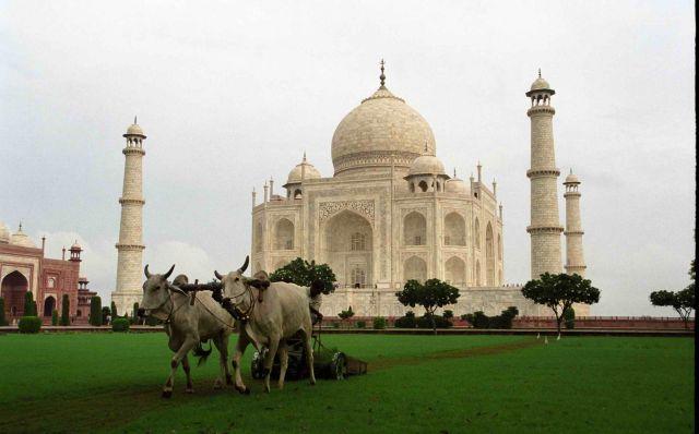 Zdj�cia: Agra - Taj Mahal, Kosiarka, INDIE