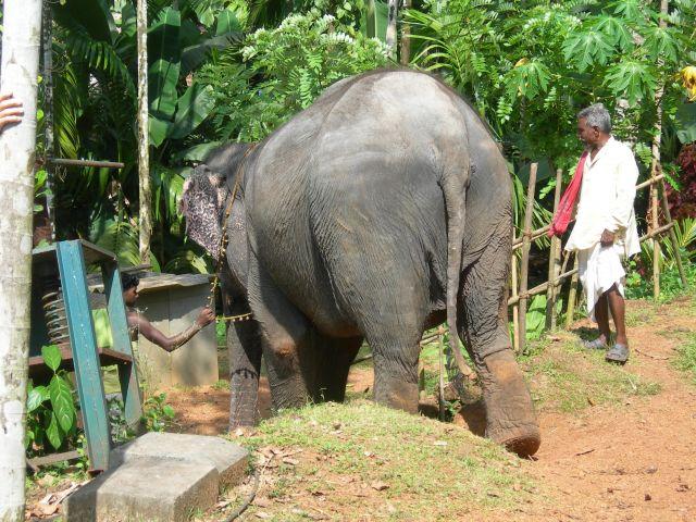 Zdjęcia: Gdzieś na Goa, Goa, Zad, INDIE