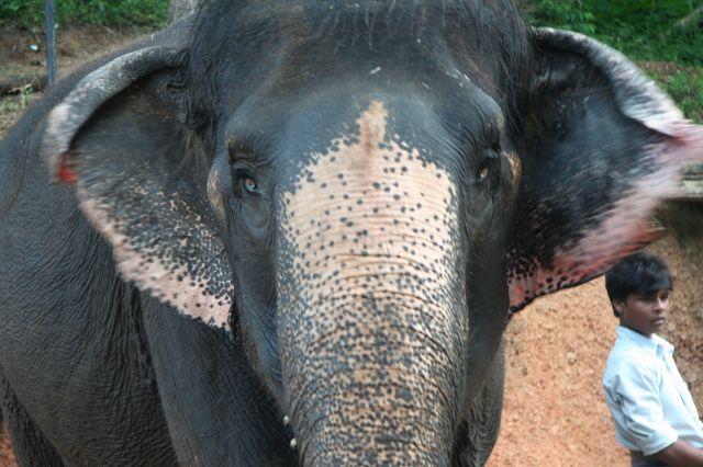 Zdjęcia: Gdzieś na Goa, Goa, Co ja Tutaj Robie?, INDIE