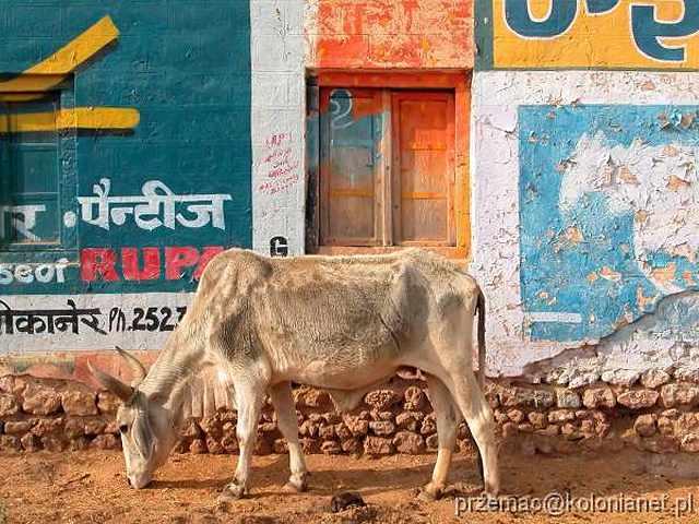 Zdj�cia: Deshnok, �wi�te byd�o, INDIE