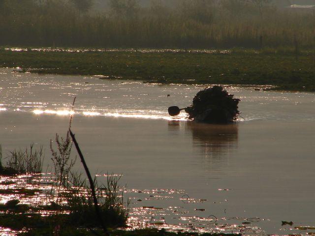 Zdjęcia: Jezioro Dal , Sikkara, Kashmir - Srinagar, wschód na jeziorze , INDIE