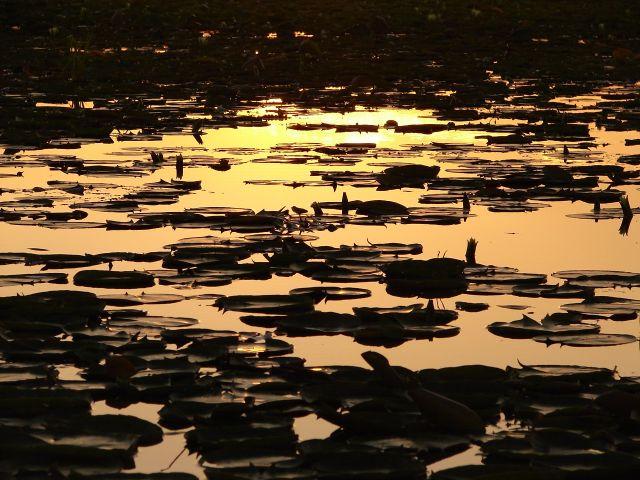 Zdjęcia: Jezioro Dal , Sikkara, Kashmir - Srinagar, jezioro Dal o zachodzie , INDIE