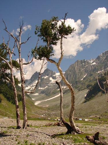 Zdjęcia: Sonamarg, Kashmir - , Bez tytułu, INDIE
