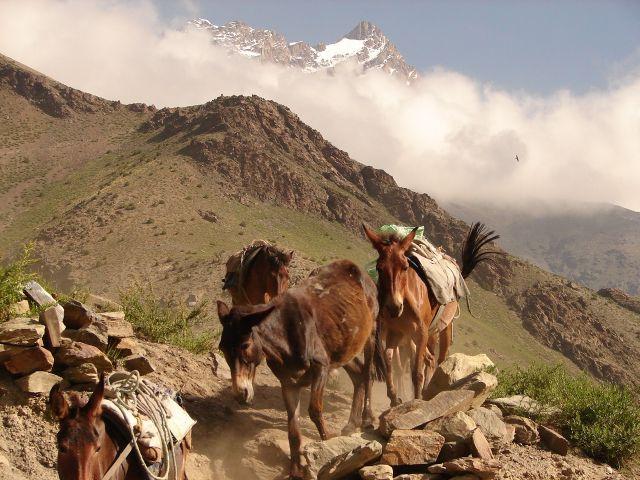 Zdjęcia: w drodze z Leh do Manali , Ladakh , bez tytułu , INDIE