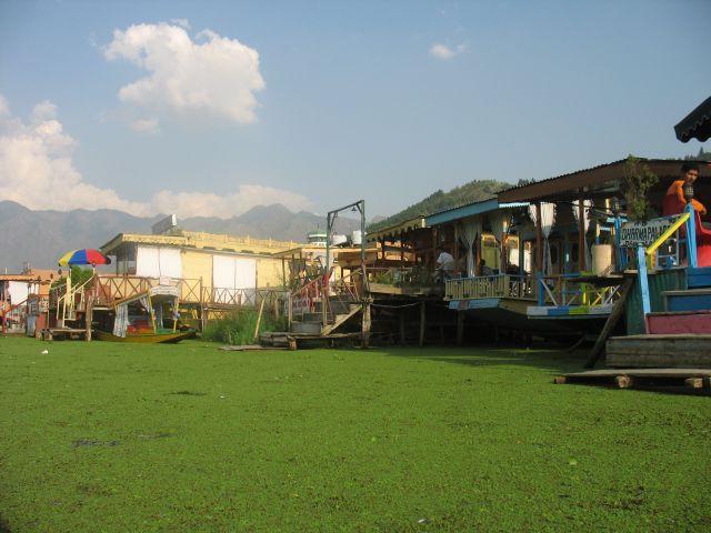 Zdj�cia: Srinagar, Kaszmir, Jezioro Dal czasem przypomina ��k�, po kt�rej mo�na p�ywa�., INDIE