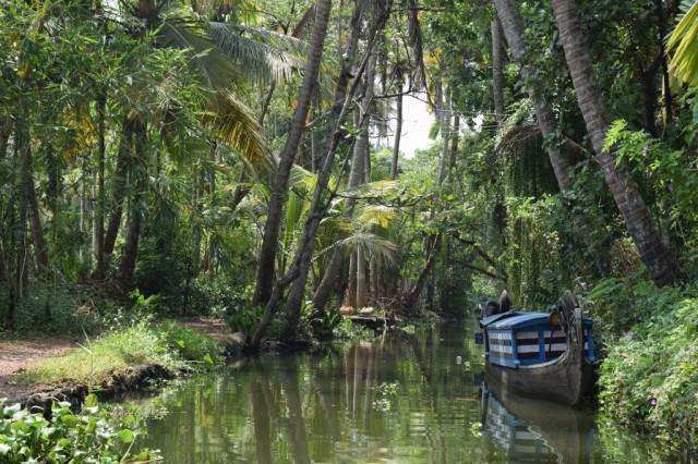 Zdjęcia: Alappuzha, Kerala, Do dżungli, INDIE