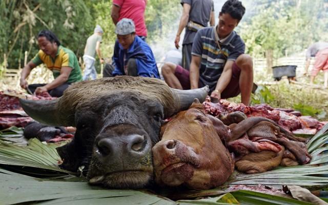 Zdjęcia: Dolina Ziro, Arunachal Pradesh, Ubój rytualny, INDIE