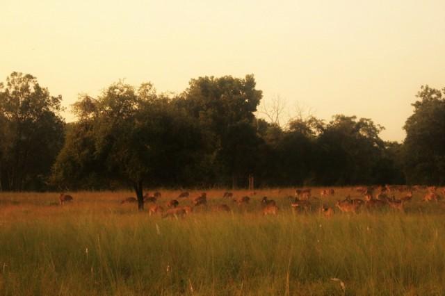 Zdjęcia: Satpura, Madhya Pradesh, zwierzęta - safari, INDIE