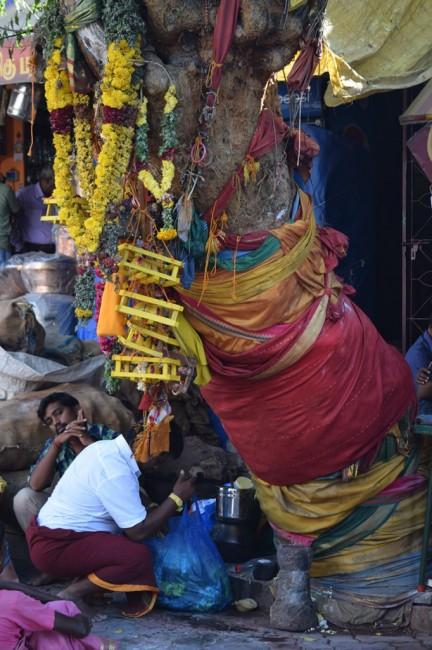 Zdjęcia: Madurai, Tamilnadu, Drzewo, INDIE