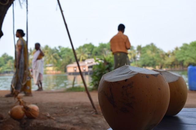 Zdjęcia: Alappuzha, Kerala, kokos, INDIE