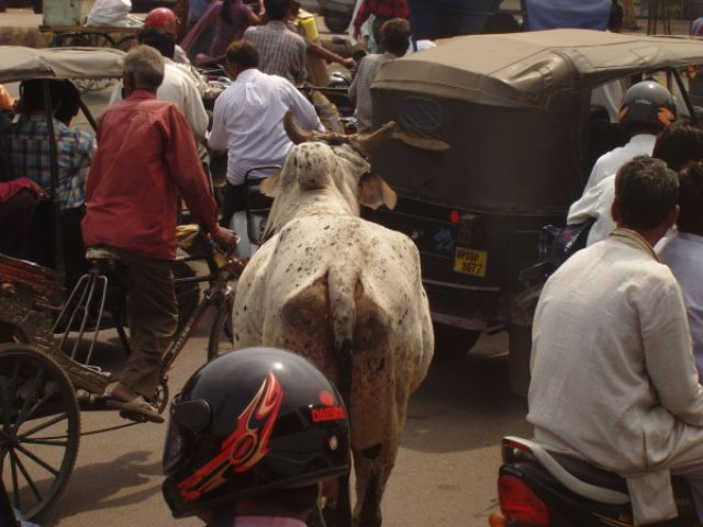 Zdjęcia: typowa indyjska ulica, Uwaga, krowa !, INDIE