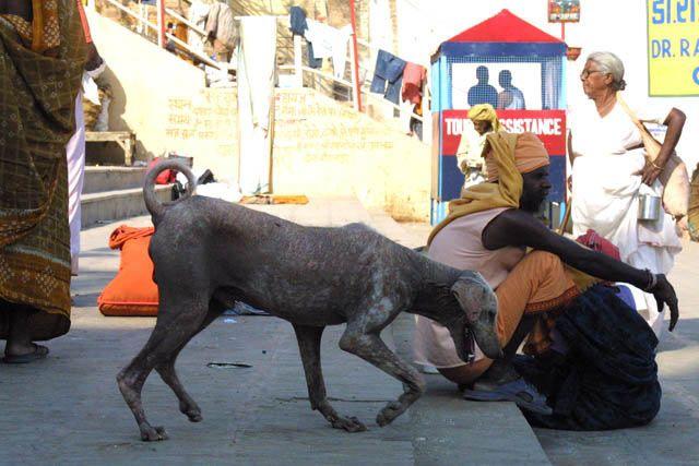 Zdjęcia: Waranasi, Uttar Pradesh, Sunia, INDIE