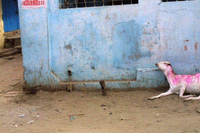Zdjęcia: Waranasi, Uttar Pradesh, Roza, INDIE