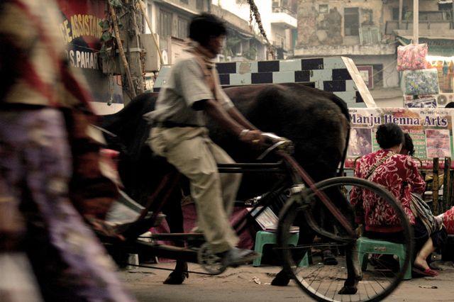Zdjęcia: Delhi, ulice Delhi, INDIE