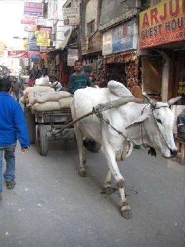 Zdjęcia: Delhi, transport, INDIE