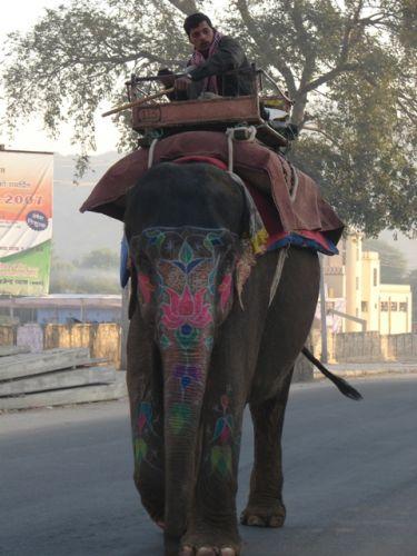 Zdjęcia: Jajpur, Malowany słoń, INDIE