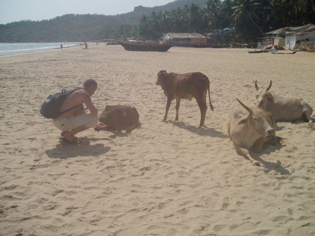 Zdjęcia: Goa, Goa, Goa, INDIE