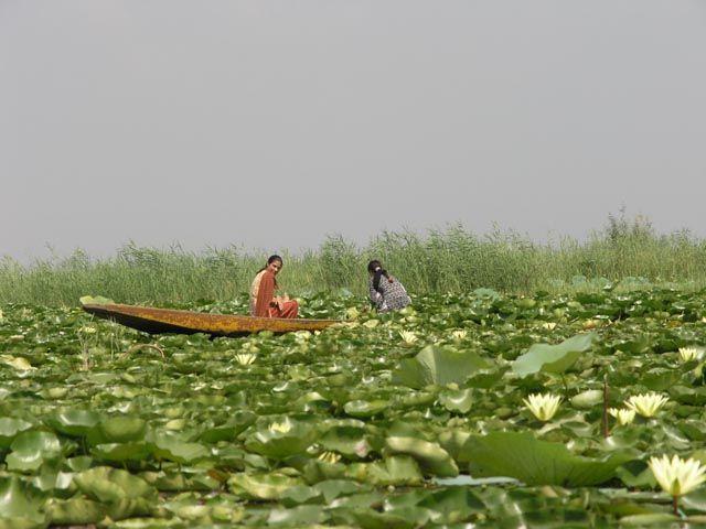 Zdj�cia: Dal lake, Kashmir, Dal lake, INDIE