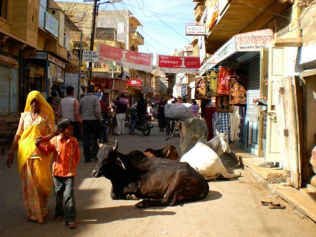 Zdjęcia: Jaislamer, Swiete krowy, INDIE