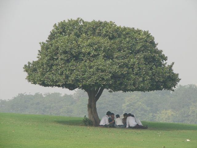 Zdjęcia: dehli, Odpoczynek pod drzewem, INDIE