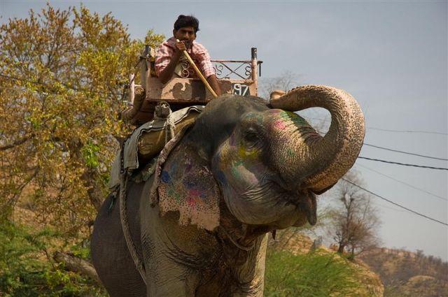 Zdjęcia: Jajphur, Radżastan, Poganiacz słoni na ulicach Jajphuru, INDIE