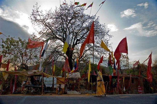 Zdjęcia: Madhya Pradesh, Madhya Pradesh , Święte drzewo, INDIE