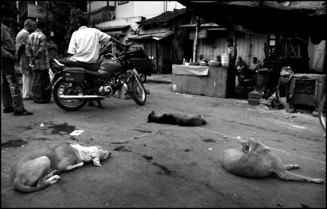 Zdj�cia: KALKUTA, KALKUTA, INDIE