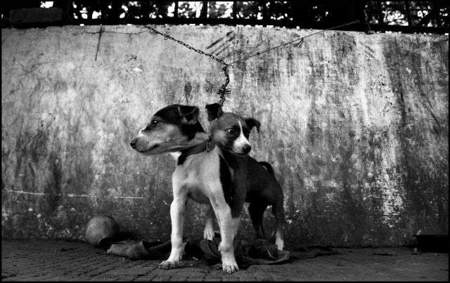 Zdjęcia: KALKUTA, KALKUTA, INDIE