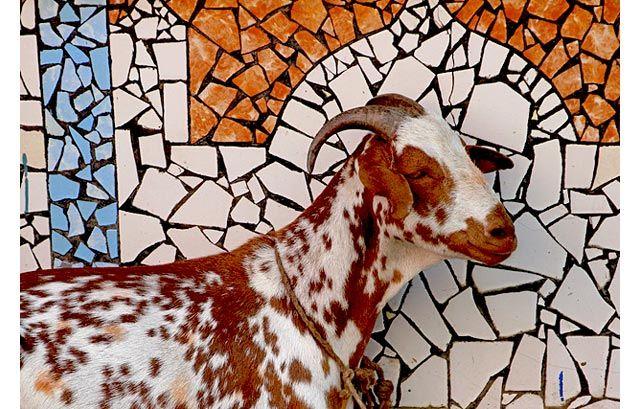 Zdjęcia: Śrinagar, Kashmir, Mozaika z kozą, INDIE