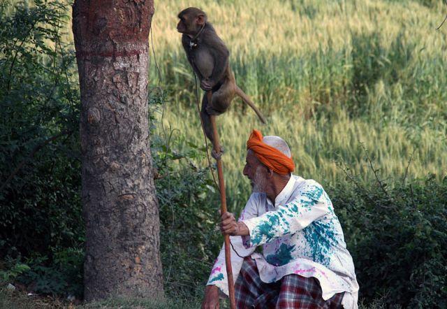 Zdj�cia: Okolice Agry, * * *, INDIE