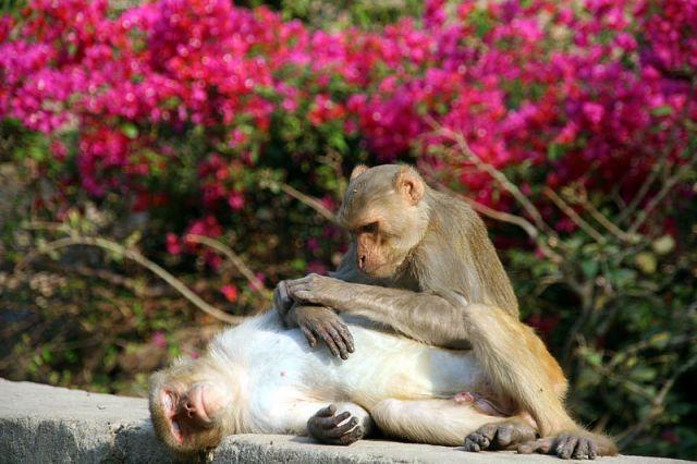 Zdjęcia: PUSHkAR Swiątynia GALTA, U Kosmetyczki, INDIE