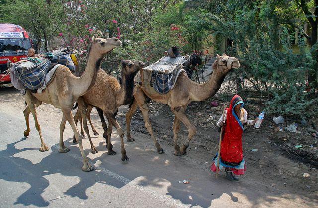 Zdjęcia: W drodze do ORCHHA, Karawana, INDIE