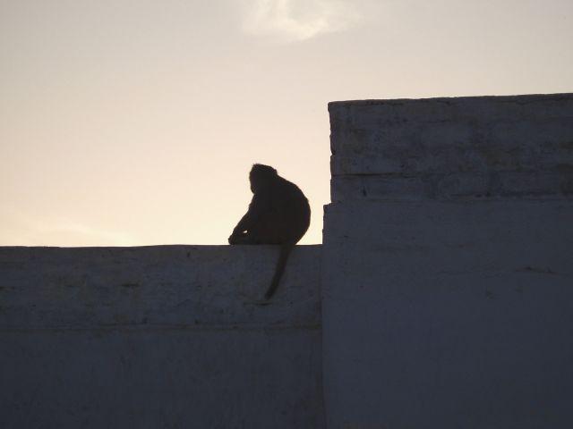 Zdj�cia: Jaipur, Jaipur, zach�d s�o�ca, INDIE