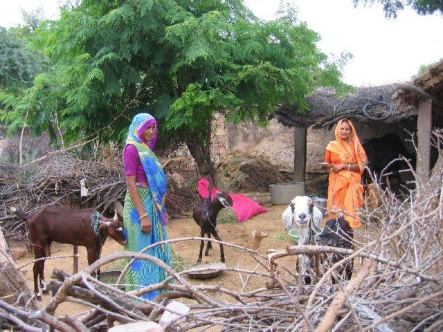 Zdjęcia: Okolice Nawalgarh, Rajasthan, Symbioza, INDIE