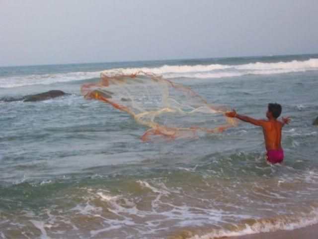 Zdjęcia: niedaleko Chennai, Tamil Nadu, polowy, INDIE