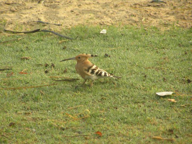 Zdjęcia: park narodowy Bharatpur, Dudek, INDIE