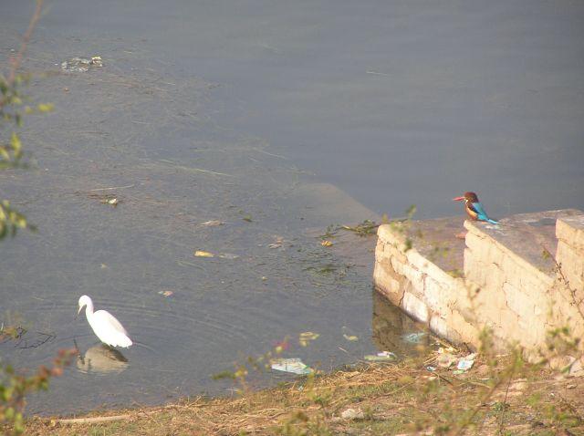 Zdjęcia: park narodowy Bharatpur, ptaki Indii, INDIE