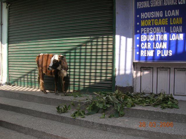 Zdjęcia: Gangtok, Sikkim, pierwszy klient, INDIE