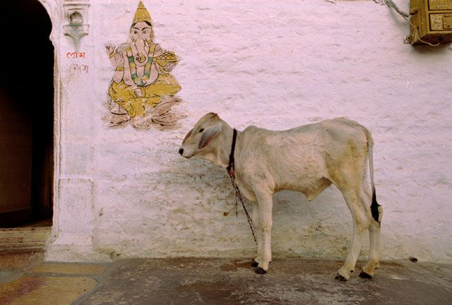 Zdjęcia: Jaisalmer, Rajasthan, scenka z ulicy, INDIE