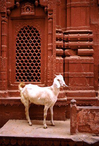 Zdjęcia: Varanasi, w Indiach wszystko co żyje jest święte, INDIE