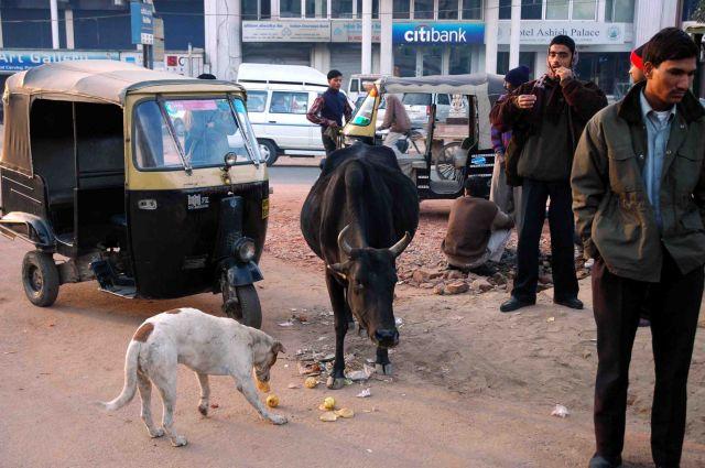 Zdjęcia: Agra, w symbiozie, INDIE